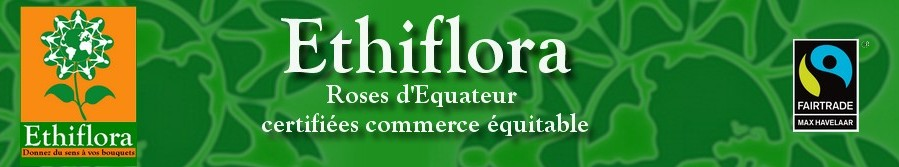 Ethiflora : Roses d'Equateur issues du commerce �quitable